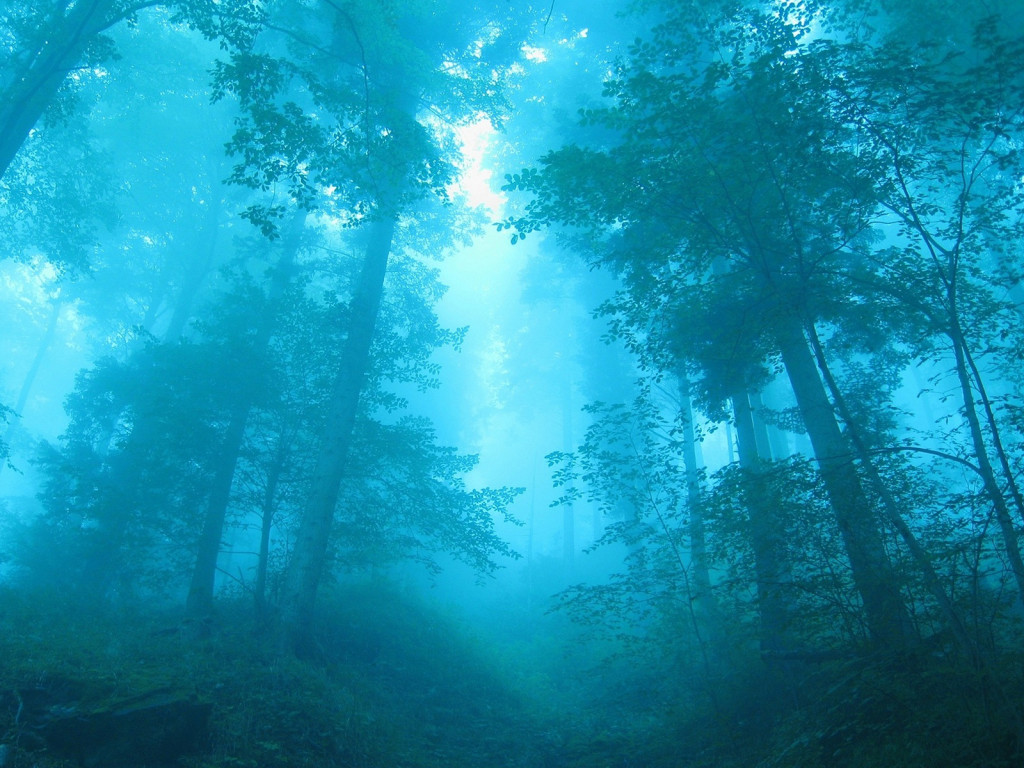 1299648629 1024x768 gothic scary forest picture