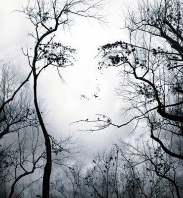 Normal face in trees illusion