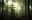 Thumb forest wallpaper background 833 best